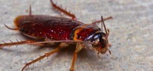 Cockroaches Treatment