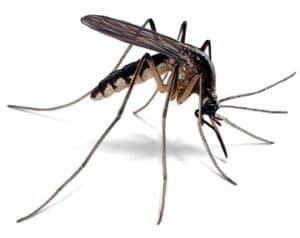 Mosquito Removal Service